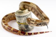 dinheiro-perigoso-12090470